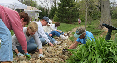 Volunteers pulling weeds